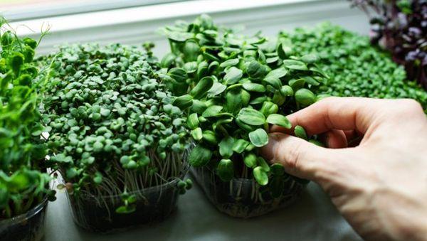 Bunte Pflanzen wirken gegen Winterblues