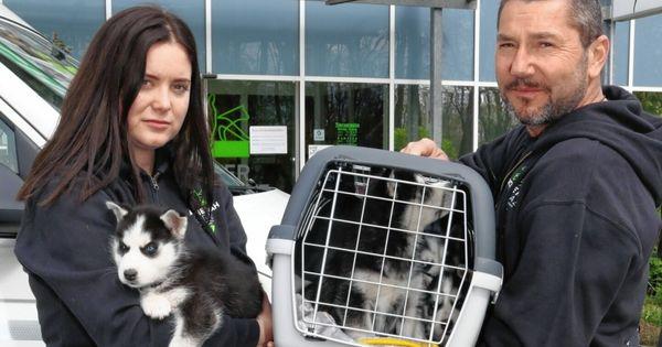 Illegaler Hundehandel flog auf: 7 Babys gerettet