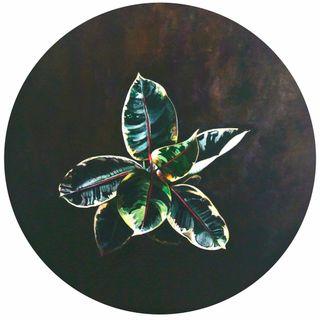 Gummibaum 1, Flowers and Plants