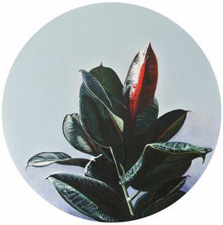 Gummibaum 2, Flowers and Plants