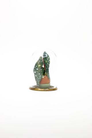 Begonia Maculata Terrarium