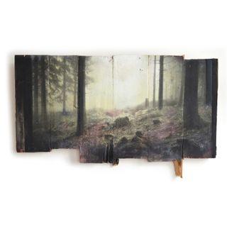 Wald-18-21