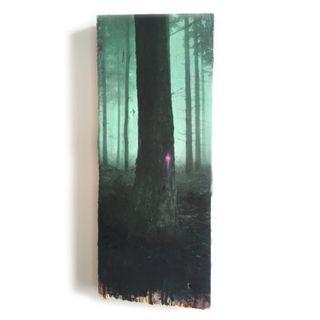 Wald-23-21