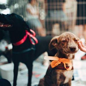 Мексикански деца строят къщи за уличните кучета, използвайки рециклирани материали
