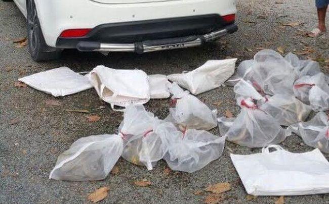 Nhóm người đi ô tô mang 10 túi rắn độc định phóng sinh lên núi ở An Giang - Ảnh 1.