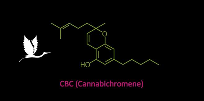 CBC (Cannabichromene) : Everything You Need To Know