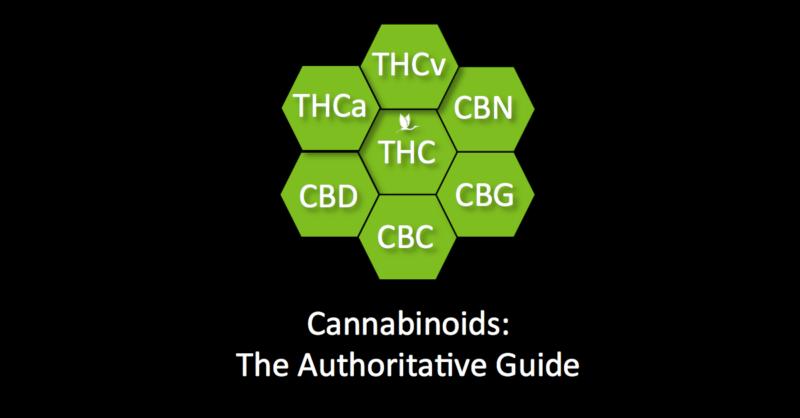 Cannabinoids: The Authoritative Guide