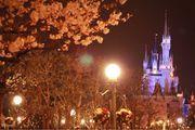 夢幻追櫻賞花地 ♥ 東京迪士尼樂園 ♥ Tokyo Disneyland