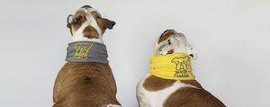 Bullfit, l'idea made in Cantù  Magliettina e rinfrescacollo  per dare fresco al cane