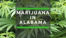 Pro-marijuana church active in Alabama: Members tout 'God and cannabis' | U.S. Marijuana Party of Kentucky on WordPress.com