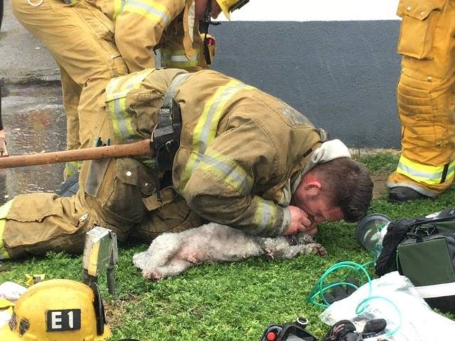 [Image: SMFD-CPR-dog-Facebook-640x480.jpg]