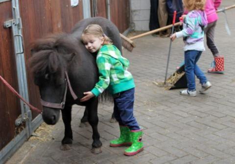 Horsetellerie Rheezerveen in Nederland - Overijssel
