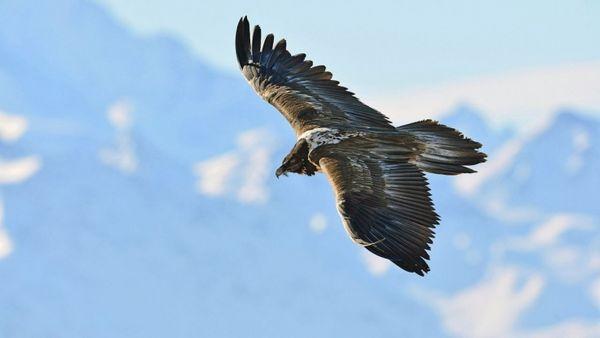 Wildnis Europa vom Dienstag bei Arte: Wiederholung der Naturreihe online und im TV