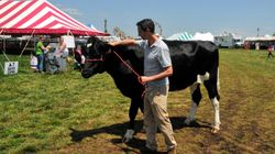 Listen to #644: How Much Does This Cow Weigh?