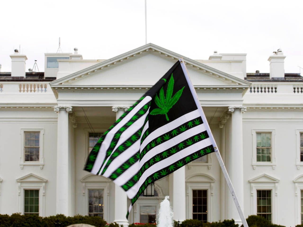 Washington may have finally found bipartisan consensus with Congressional Cannabis Caucus