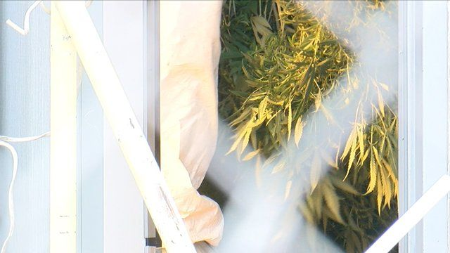 5 things to know about Thursday's marijuana raids in Colorado