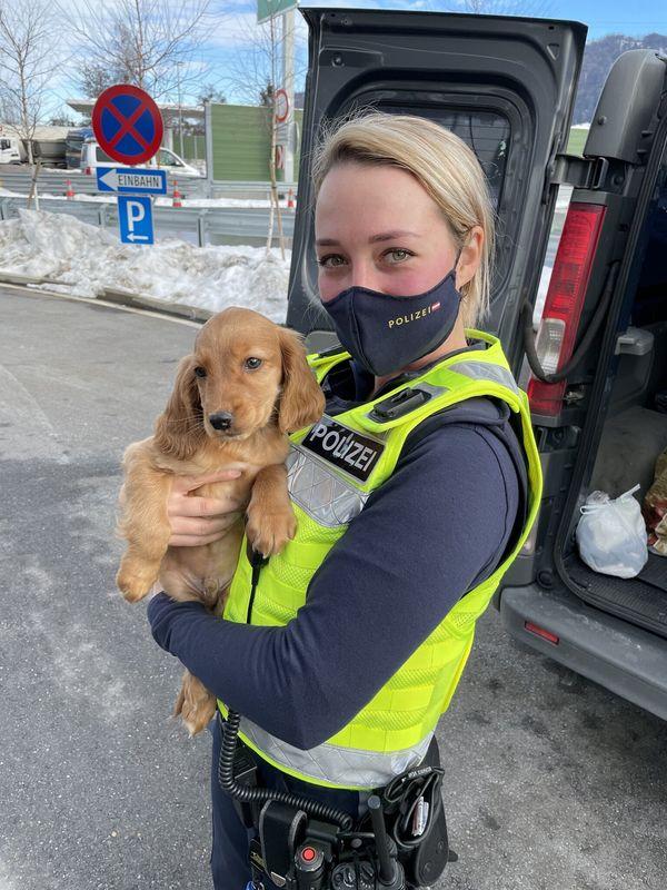 Illegaler Tierhandel in Vorarlberg entdeckt: Welpe vor illegaler Übergabe gerettet