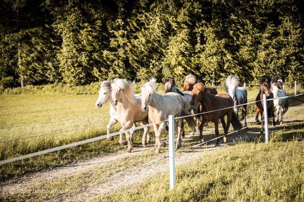 Das Glück dieser Erde ...: Reiten auf St. Radegunder Islandpferden