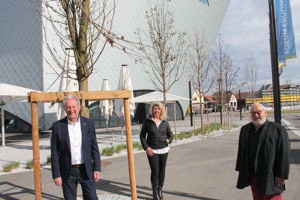 Stadt Krems: Neue Bäume schmücken den Franz-Zeller-Platz