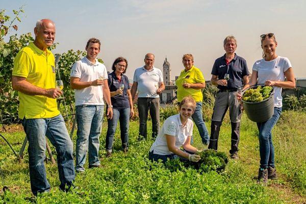 Stadt Krems: Nun wird der Wein mit Trauben aus drei Weingütern in Stein getauft