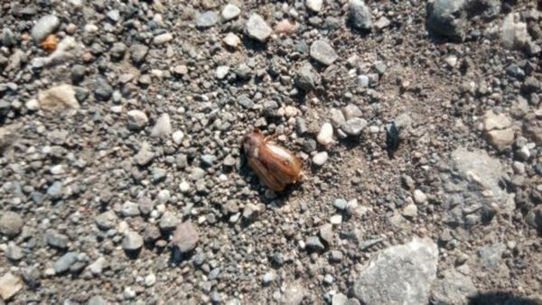 Gail Dobratsch Natur: Der Käfer und die Löcher im Blatt