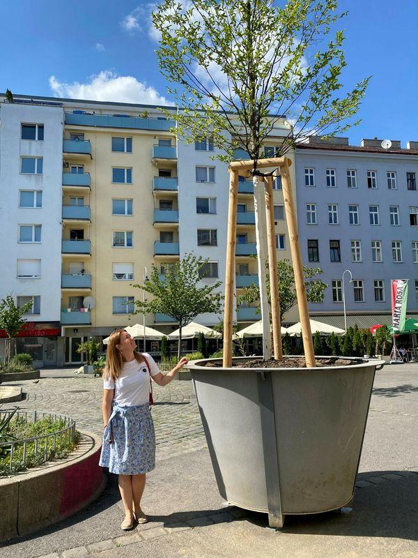 Siebenbrunnenplatz: Sieben neue mobile Bäume