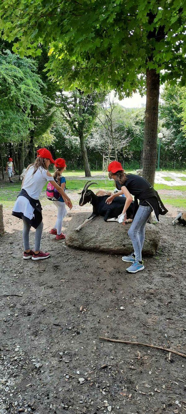 Tierischer Ausflug: Ferienspiel im Zoo Schmiding mit dem Theater Sellawie