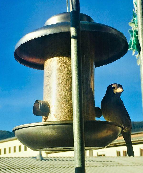 Winterfütterung und Nistkästen für Vögel vorbereiten!: Freude beim Beobachten von Wintervögel!