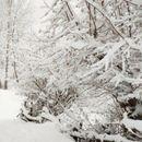 Ако ве завее снег, јавете се на 195
