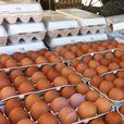 Која е разликата помеѓу белите и кафените јајца?