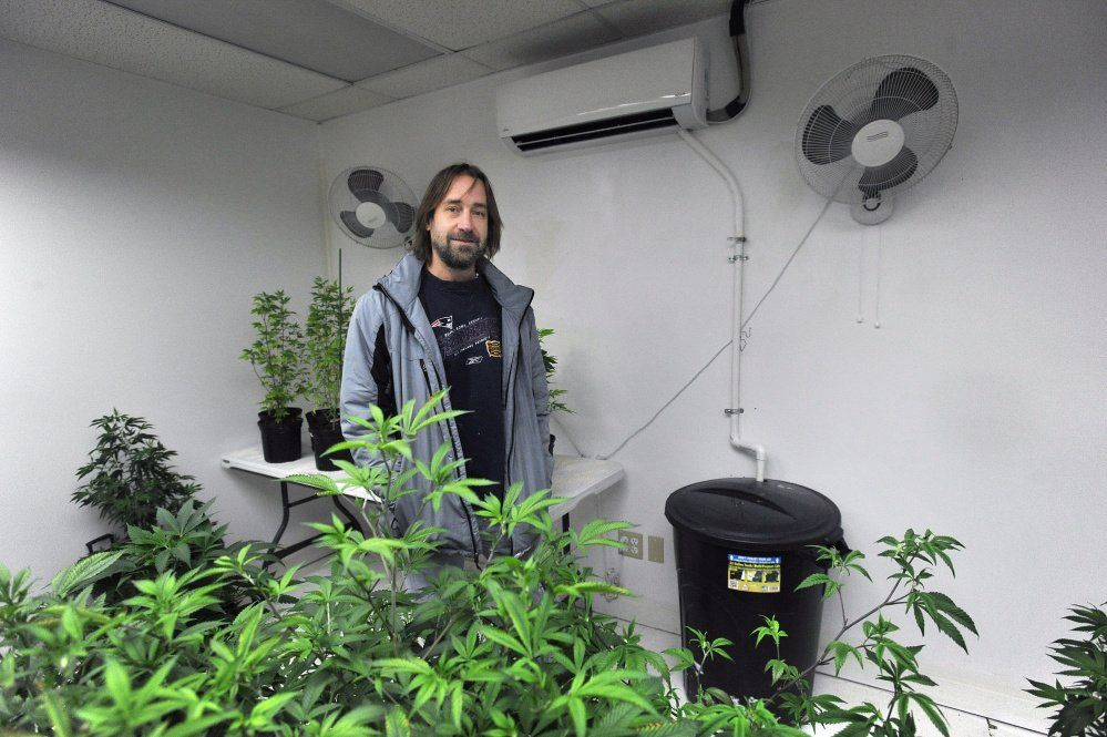 Did you know marijuana is America's most energy-intensive crop? - The Portland Press Herald