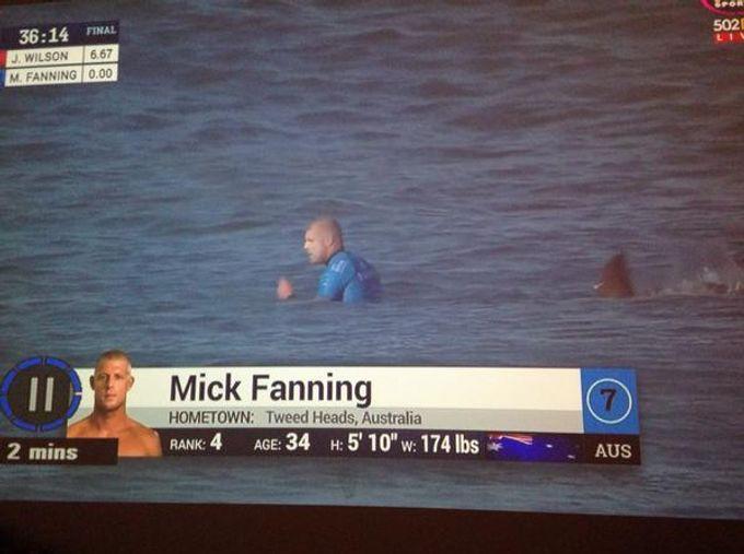 滑浪比賽中,選手受到鯊魚襲擊!