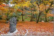 福岡【景點】太宰府光明禪寺紅葉枯山水賞楓 - 九州自由行紅葉景點