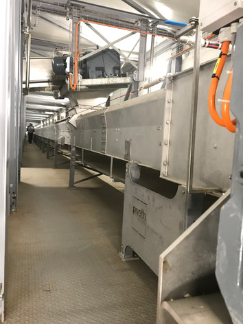 Green malt belt conveyor - Malt Handling / Breweries Industry - Poeth Solids Processing - Tegelen