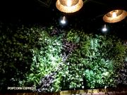 【銅鑼灣】吸睛的綠油油的草牆✿Neighbor