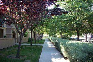 Vineyard Gardens for rent