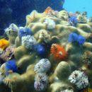Uznemirijuće prognoze: Milion vrsta biljaka i životinja nestaće zbog ljudskih aktivnosti