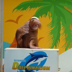 İstanbul Dolphinarium Mors