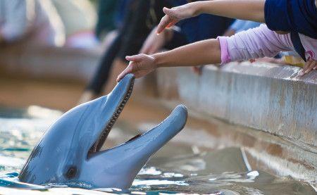 Dolphin Up-Close Tour