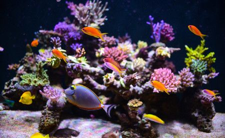 Tropical Fish Exhibit