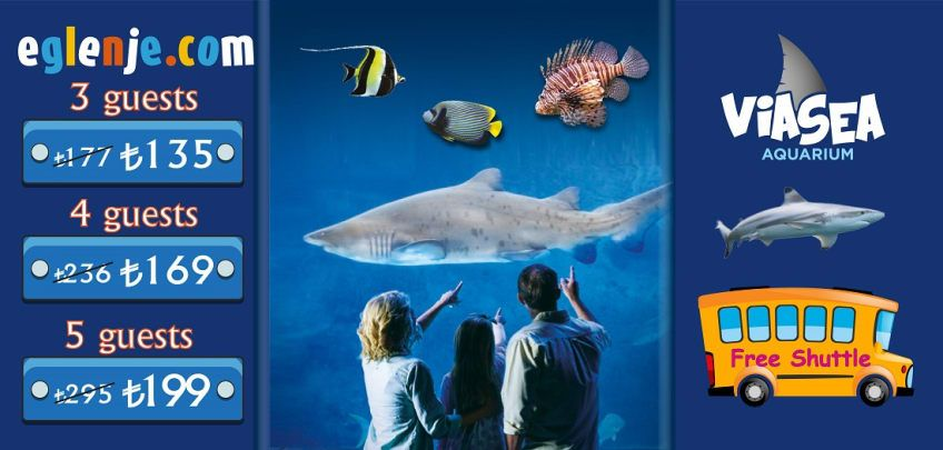 Viasea Aquarium Family And Group Tickets