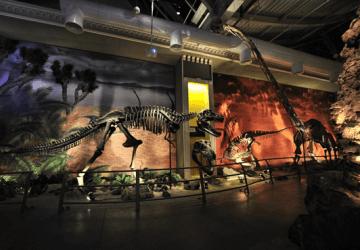 Jurassic Land Dinazor Parkı