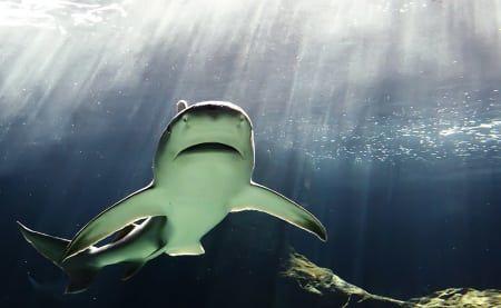 Shark Exhibit