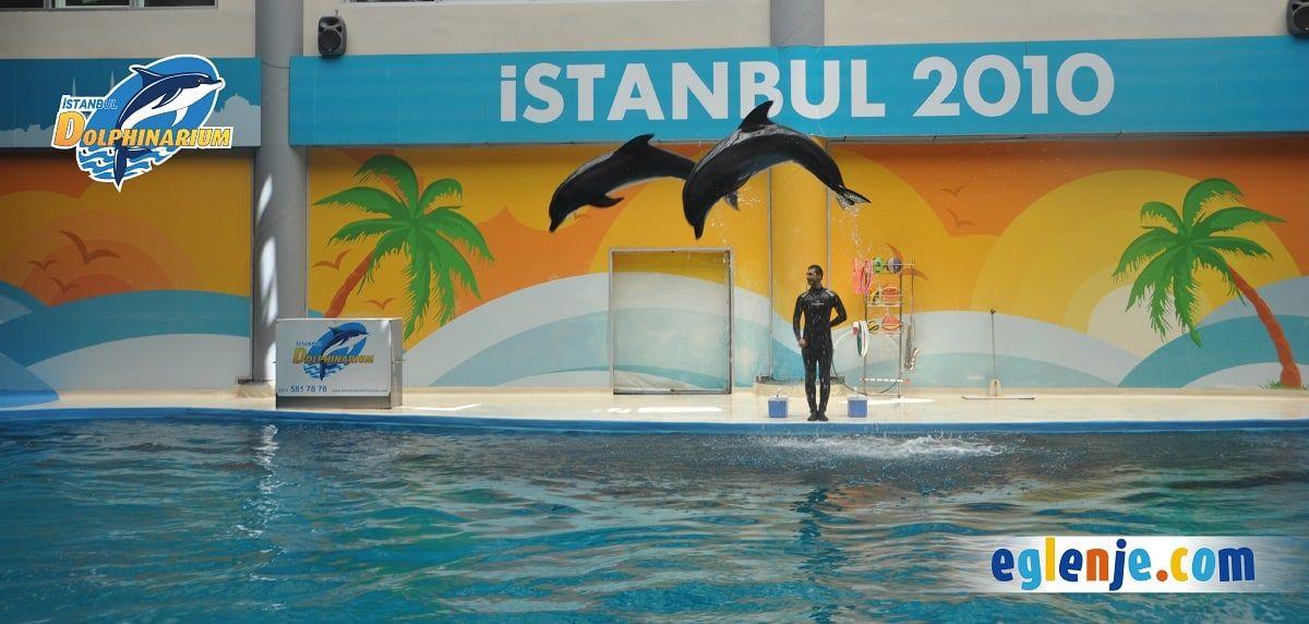 İstanbul Dolphinarium Banner 4