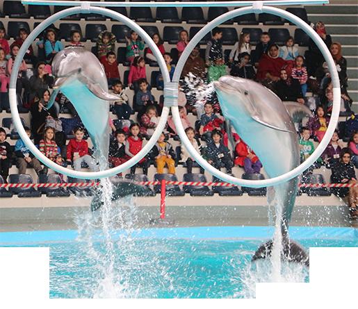 İstanbul Dolphinarium Bilet Fiyatları Thumb