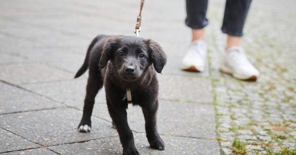 Abgaben und Gebühren in Neuss: Warum die Hundesteuer umstritten ist