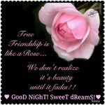 New Good Night Images With Flowers And Quotes Top Collection Of Different Types Of Flowers In The Images Hd