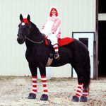Halloween Costumes For Horses Original Mane N Tail Animal Care