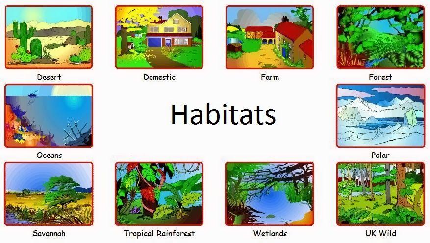 Image result for animal habitats