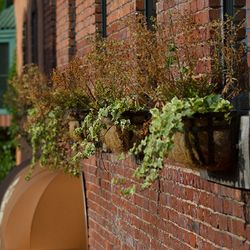 Photo of Green Flower Boxes next to Lacal Waynesville Cafe